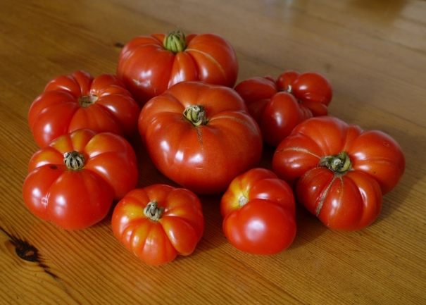 Tomatoes resized