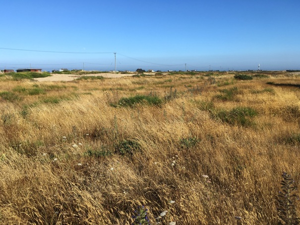 Across the rough grass